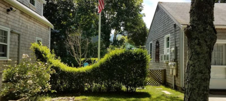 whale-hedge-on-nantucket