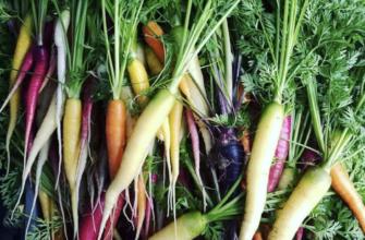 sustainable nantucket - local food